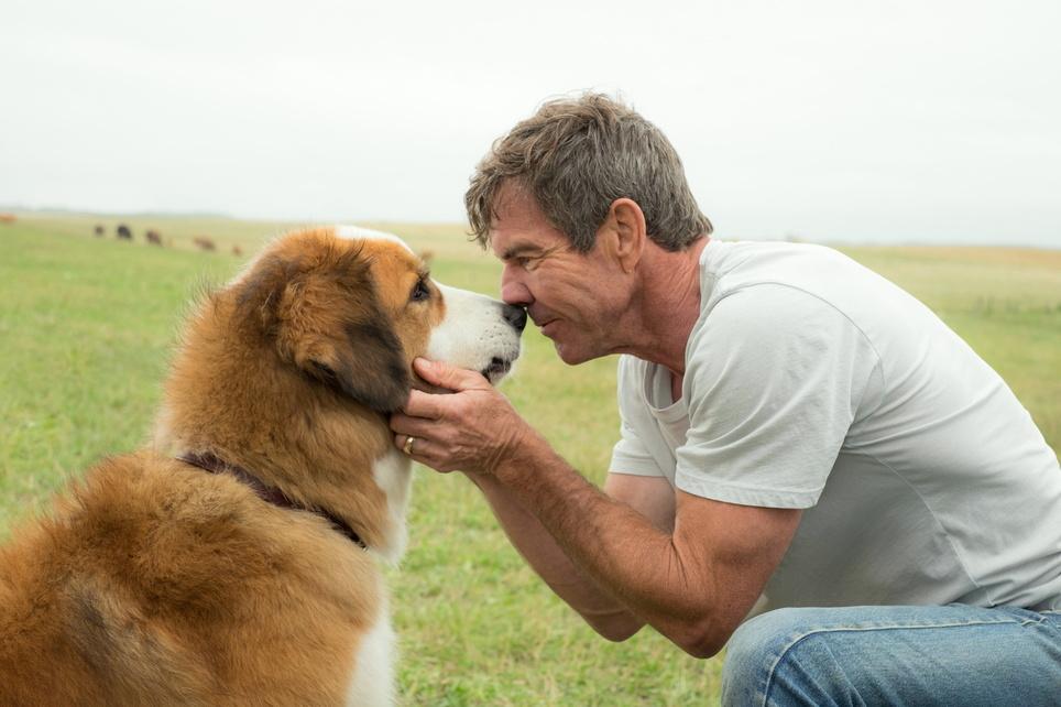Bailey - Ein Freund fürs Leben A Dog's Purpose, Kinostart 23.02.2017, USA 2017