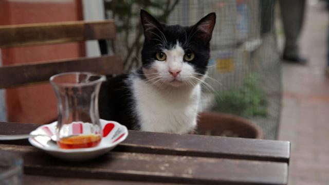 Kedi - Von Katzen und Menschen Filmbild Bild-1