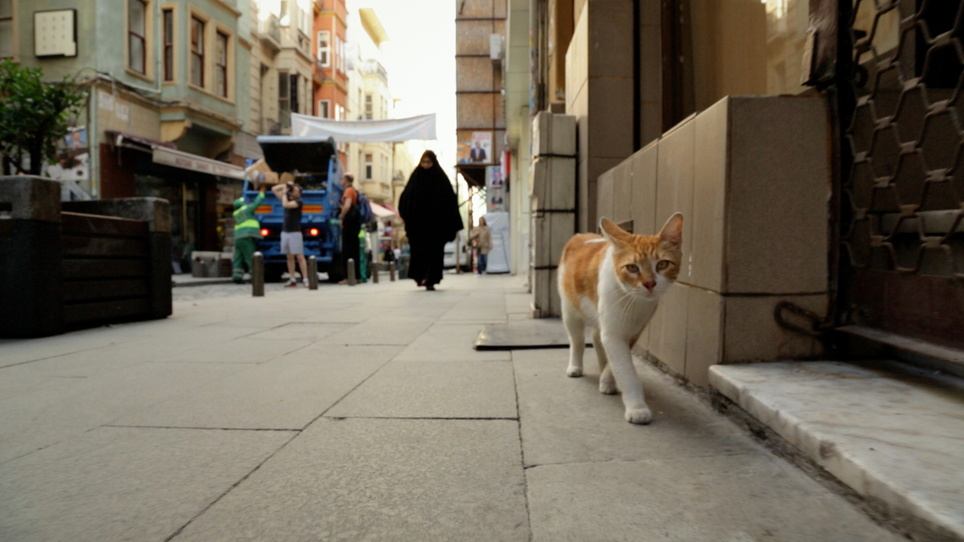 Kedi - Von Katzen und Menschen Kedi, Kinostart 10.08.2017, Türkei/USA 2016
