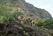 Jumanji: Willkommen im Dschungel Filmbild 976624