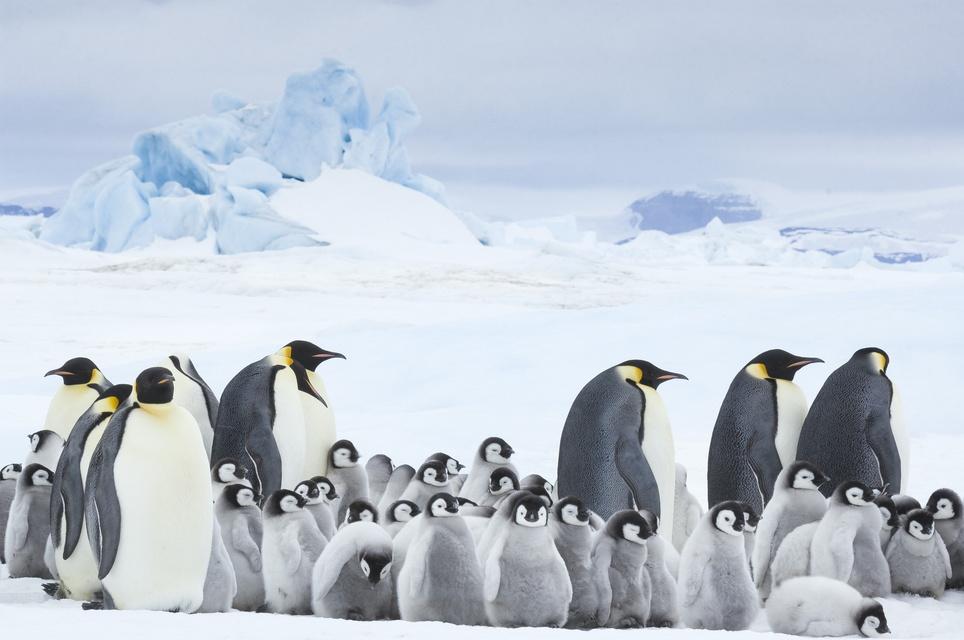 Die Reise der Pinguine 2 L' empereur, Kinostart 02.11.2017, Frankreich 2017