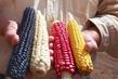 Unser Saatgut - Wir ernten, was wir säen Filmbild 990011