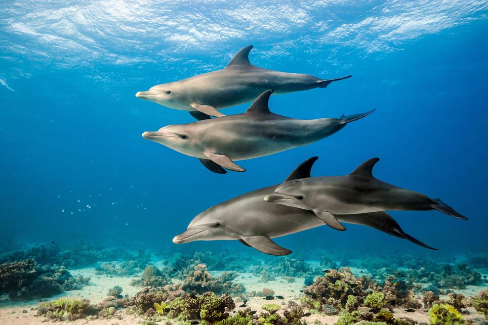 Delfine Dolphins, Kinostart 21.06.2018, USA 2018
